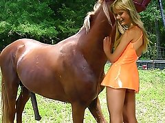 Sexy slut playing with tamed for sex brown horse